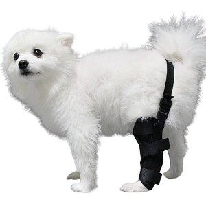 강아지슬개골보호대 허리고정형 S 왼쪽