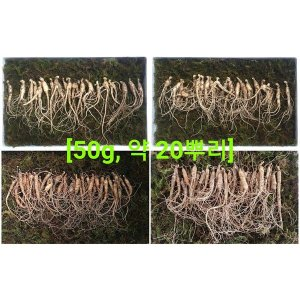 한삼애  실속형 못난이 산양산삼 5년근 50g약 20뿌리