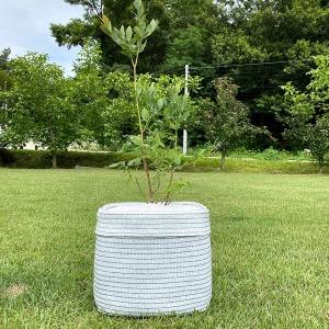 깨비 화분 대형(50L) 블루베리 베란다 텃밭 옥상 화분