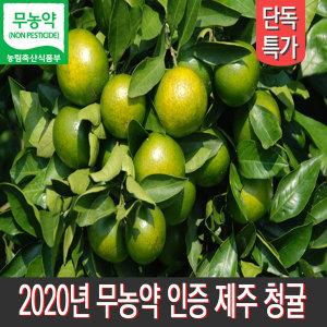 제주농장 무농약인증 풋귤 청귤 5kg 산지직송