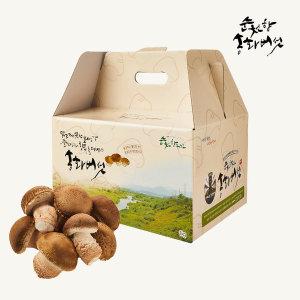 송화버섯 선물세트 실속형 1kg 순천향 송화버섯