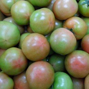 탱글탱글 정품 찰토마토 토마토10kg 4번(고냉지 아님)