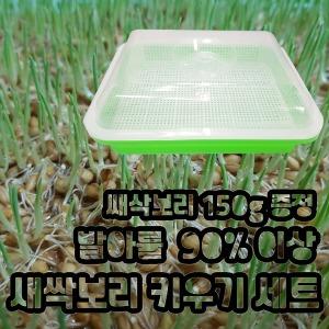 발아율이 좋은 새싹보리 키우기 보리씨앗 150g 포함