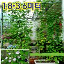 넝쿨 식물 그물망 180x360-장미 오이 호박 담쟁이