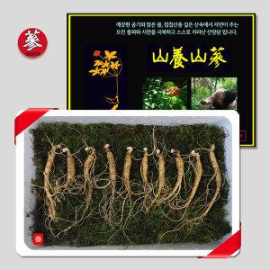BIG HIT 삼바이 토종 산양삼 5년근 10뿌리 선물세트