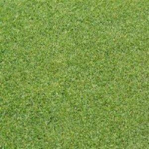 크리핑 벤트그라스 1kg 그린용잔디씨 잔디씨앗