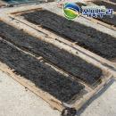미역 돌미역 산모용 자연산 돌미역대장각 울산 정자
