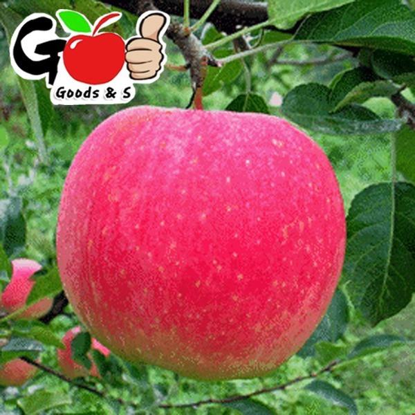 빨간 사과 C급파치 9kg 쥬스/잼/사라다/파치용
