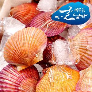 통영 산지직송 가리비 1kg 제철 홍가리비 (35미내외)