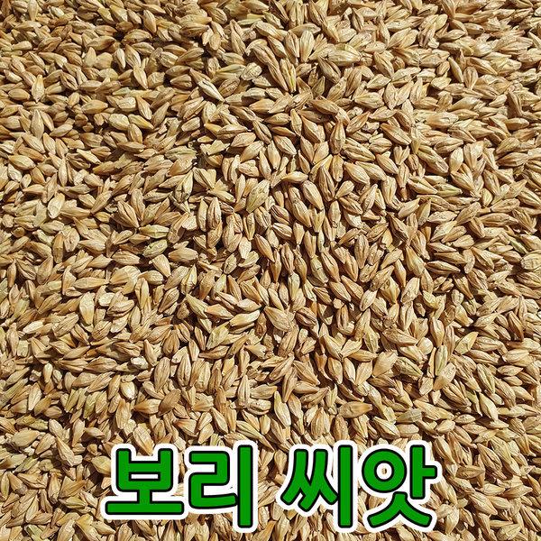 오상라이스 보리씨앗 새싹보리 국산 2kg 20년햇곡