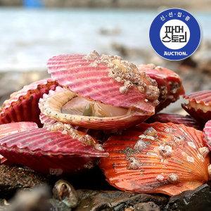 (얌테이블) 통영 홍가리비 2kg 60-80미