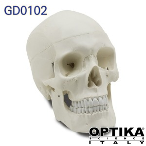 이탈리아 OPTIKA 두개골모형 기본형 GD0102 3분리