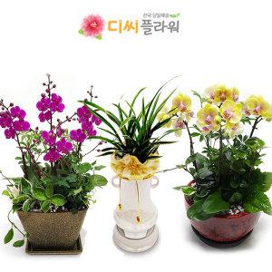 동양난/서양난/관엽 개업/승진 꽃배달/꽃집/화원