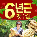 국산 가정용 싱싱한 인삼 6년근 햇세척인삼500g 7-10편