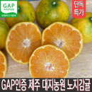 GAP인증 제주 노지감귤 5kg 고당도 대지농원 산지직송