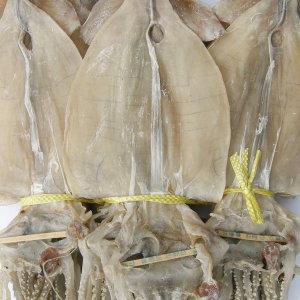 마른오징어 20마리 1.3kg 신선한 당일바리 오징어