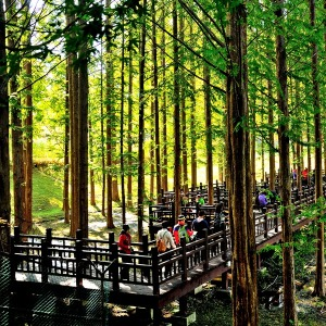 |충북| 괴산+청주 - 석식체험제공 / 청남대+연하협출렁다리+산막이옛길+갈론계곡