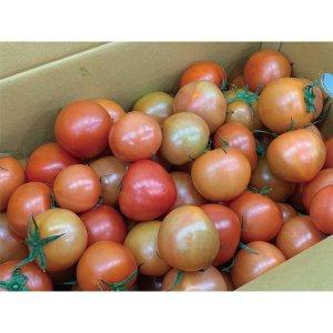 자연속애/토마토/正品 토마토 5kg 산지직송/3~4번과