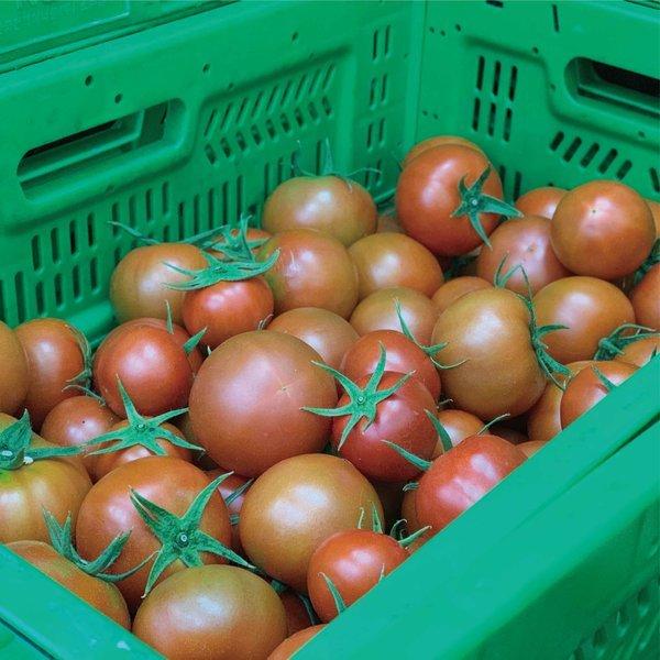 자연속애/쥬스용 토마토 5kg 산지직송/못난이 토마토