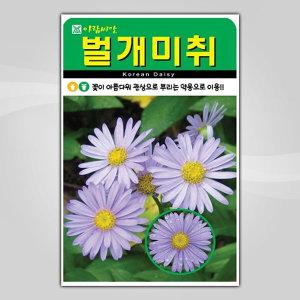 슬로시 꽃씨앗 벌개미취500립 씨앗