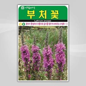 슬로시 꽃씨앗 부처꽃5000립 씨앗