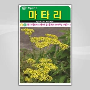슬로시 꽃씨앗 마타리1500립 씨앗