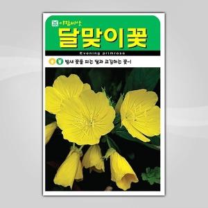 슬로시 꽃씨앗 달맞이꽃4000립 씨앗