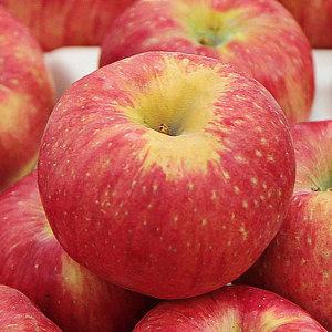햇 사과 부사 5kg(가정용/꼬마소과/26-30과내외)