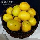 생생스토리 생 모과 5kg내외(16-20과내외)/모과청