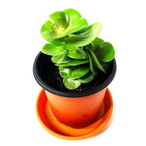 공기정화 초화식물 녹비단 외 50종