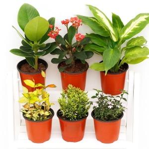 공기정화 식물 특가할인 관엽 꽃 화분 120종