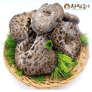 자연산 능이버섯 건조 C급