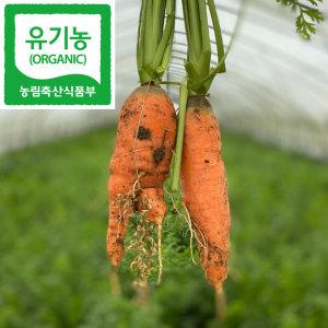 유기농 녹즙 용 당근 1Kg (케일 샐러리 신선초 비트)