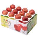 사과를 박스채 담아 청송햇부사 10kg(20~26과)-대과