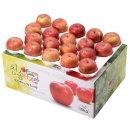사과를 박스채 담아 청송햇부사 10kg(38과)-중소과