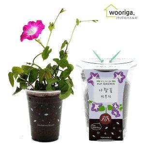 컵가든 나팔꽃 /미니화분키우기 꽃 화초 공기정화식물