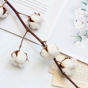 겨울 드라이플라워 꽃병용 목화가지/줄기생화