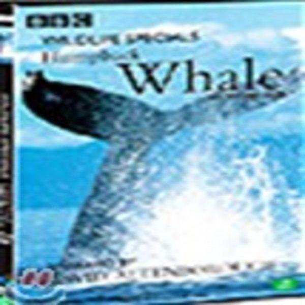 혹등고래 : 와일드라이프 스페셜