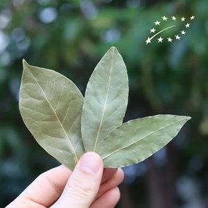 유기농 월계수잎 5g