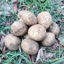 미소진 2020년 국내산 제주 감자 (중) 3kg