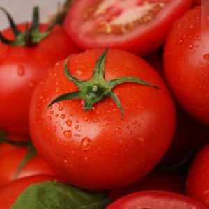 흙살림 친환경 무농약 토마토 2kg