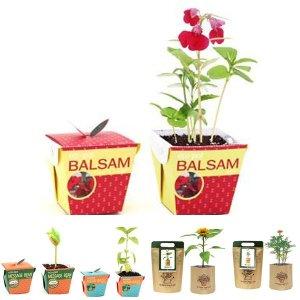 에코팟_봉선화 식물키우기 화분 정원/미니/재배기