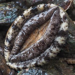 산지직송 진도 특대 활전복 10~11미 1kg (선물용)