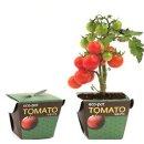 에코팟_방울토마토 식물키우기 화분 정원/실내/책상