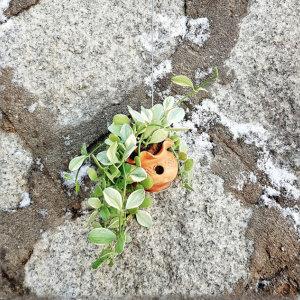 에어플랜트 디시디아 옹기항아리화이트  공기정화식물