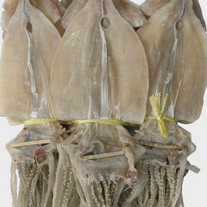 동해안 마른오징어 20미1.7kg