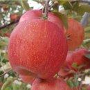 사과10kg..부사사과10kg(35~39과) 가정용 선물