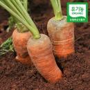 햇 흙 당근 3kg 유기농 제주 구좌 당근