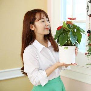 담따 베이직라인2호화분(받침포함) 화분커버 미니화분