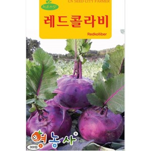 레드콜라비씨앗/ 300립 적콜라비 콜라비 순무 씨앗